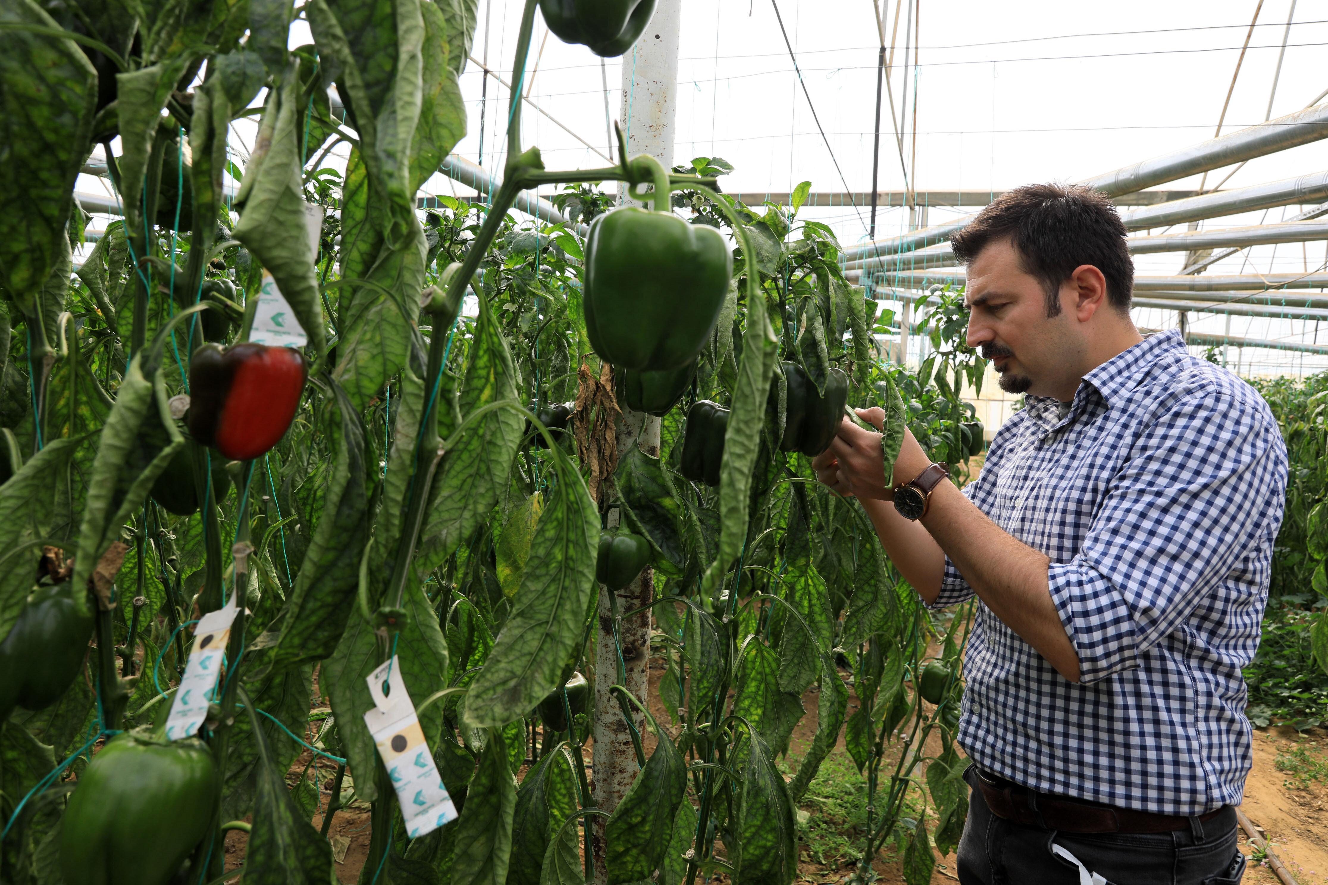 Antalya'da üretilen ürünler hem iç piyasaya sunuluyor hem de ihraç ediliyor.