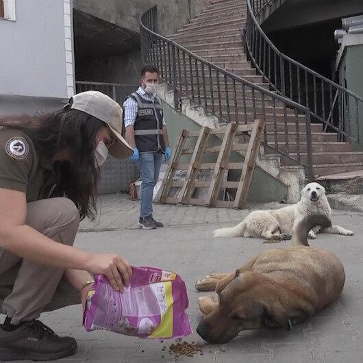 Artvinde polis ekipleri tam kapanmanın ilk gününde sokak hayvanlarını besledi