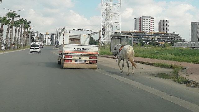 Kamyonetin arkasına bağladıkları atı kilometrelerce koşturdular