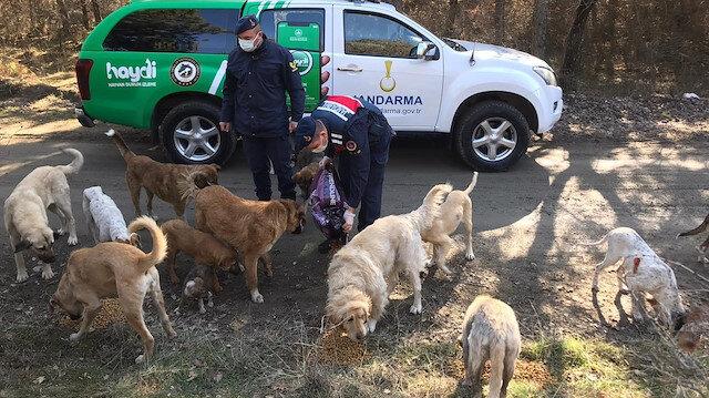 Kastamonu jandarması kısıtlamada sokak hayvanlarını unutmadı