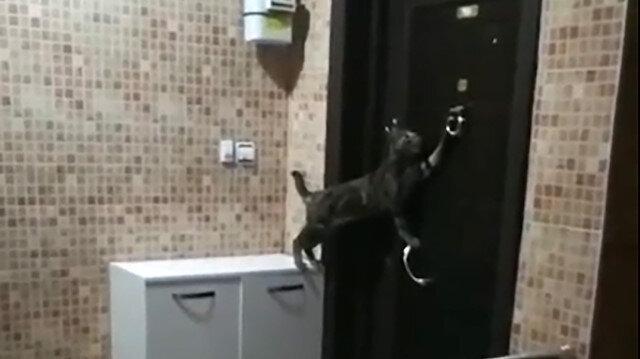 Daireye girebilmek için tokmağı çalan kedi güldürdü