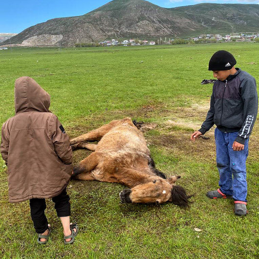 Ardahanda ayağı kırılan sahipsiz atı çocuklar elleriyle besledi
