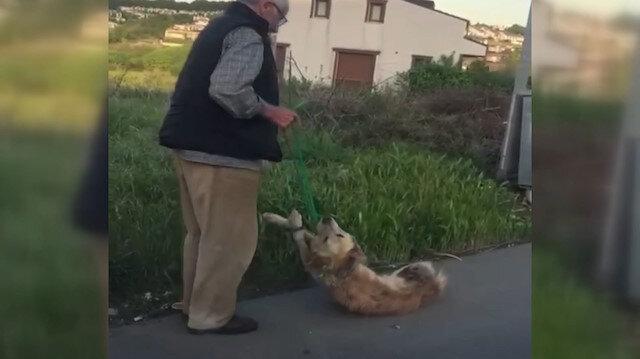 Vicdansız adam silahıyla öldürdüğü köpeğin boğazına ip bağlayarak sürükledi