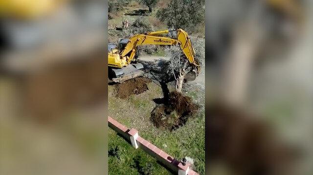 Edremit Belediyesinin iş makineleriyle ağaç kıyımı vatandaşın kamerasına yansıdı