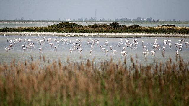 Türkiye göçmen kuşlara Avrupa-Afrika kıtaları arasında köprü oluyor
