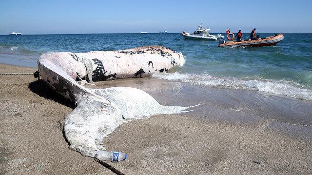 Mersin'de kıyıya vuran dev balina görenleri şaşkına çevirdi