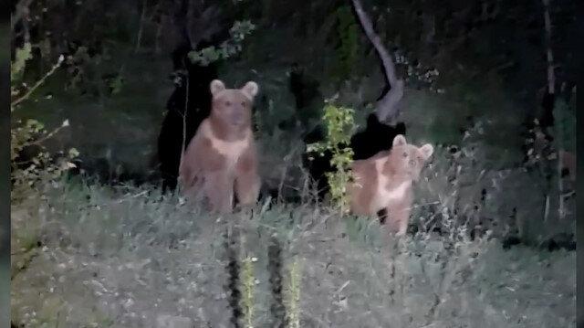 Gümüşhane'de yavru ayılarla gülümseten diyalog kameralara yansıdı