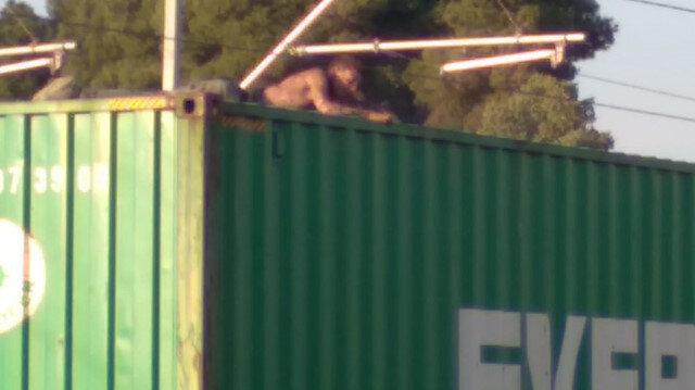 Manisa'da korkunç olay: Sadece fotoğraf çekilmek istemişti
