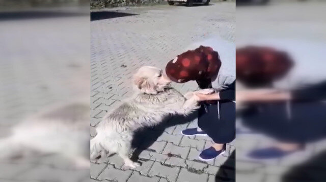 Bolulu Şerife Teyze'nin kaybolan köpeğiyle buluşma anı güzel görüntüler oluşturdu
