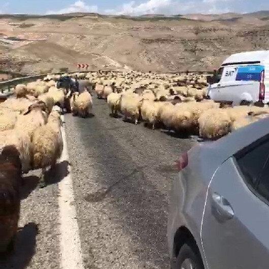 Siirt'te koyun sürüsü karayolunu kapattı