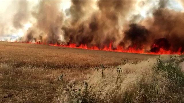 Adıyaman'da dev yangın: Alevler bin 100 dönüm ekini kül etti