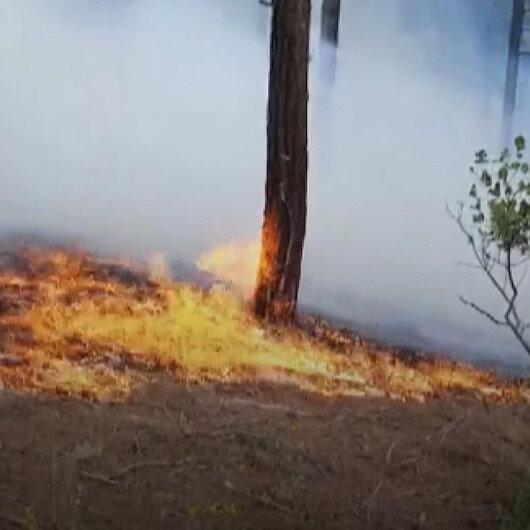 Adanada orman yangını çıktı