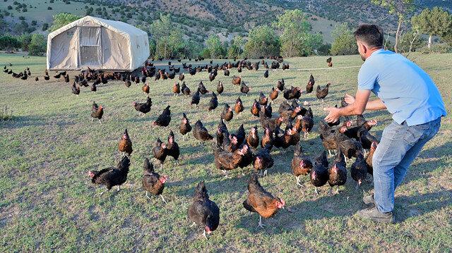 Türkiye'ye örnek olabilecek bir proje: Tavuklarını 'gezen kümes' ile yaylaya çıkaran üretici yumurta talebine yetişemiyor