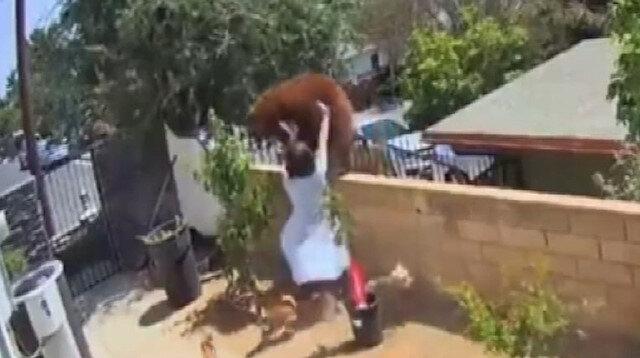 Köpeklerini korumaya çalışan kadın ayıyı elleri ile itti: O anlar kamerada