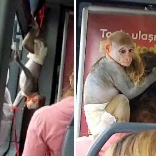 Sevimli maymun yaptığı hareketlerle otobüsün maskotu oldu