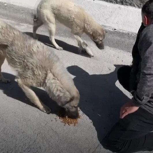 Her gün 10 kilometre yol katederek sokak hayvanlarını besliyor