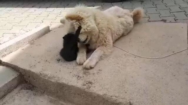 Bursa'da kediyle köpeğin görülmeye değer dostluğu