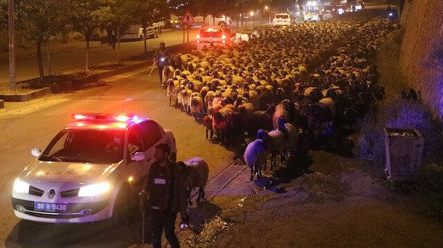 Dört sürü halindeki 10 bin koyun Hakkari şehir merkezinden polis eskortu ile geçti