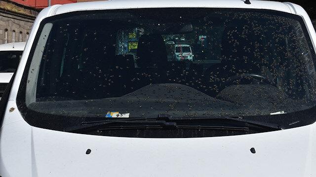 Kars'ta hareket halindeki araçta arı kovanı devrildi: Aracın içi arı doldu
