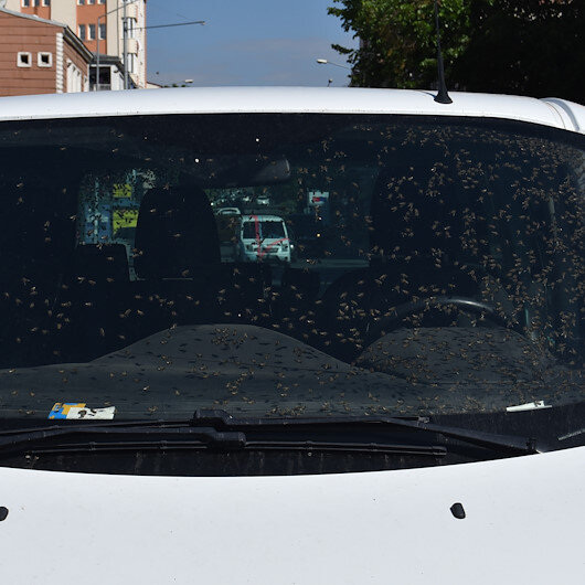 Karsta hareket halindeki araçta arı kovanı devrildi: Aracın içi arı doldu