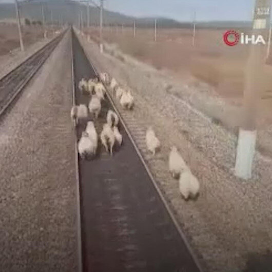 Rusyada seyir halindeki yük treni koyun sürüsüne çarpmaktan son anda kurtuldu