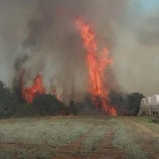 Antalyada çıkan yangında seralar ve ağaçlar yandı
