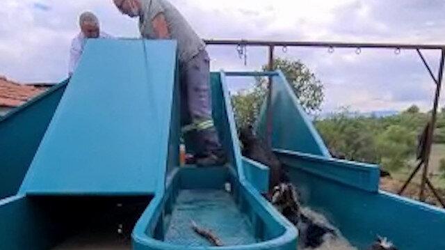 Kütahya'da keçilerin banyosu sevimli görüntüler oluşturdu
