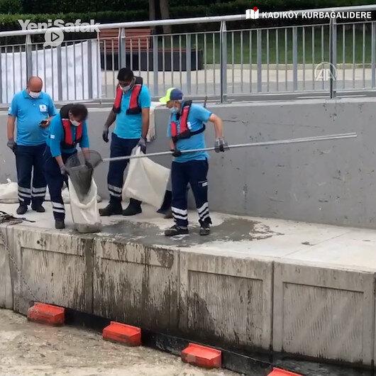 Kadıköy Belediyesinden müsilajla ilginç mücadele: Bir temizlik personeli ağ ile Kurbağalıdereden deniz salyası topladı