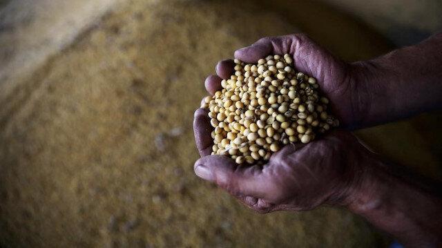 Tohum üretimi ve ihracatında dikkat çeken gelişme: Yüzde 756 arttı