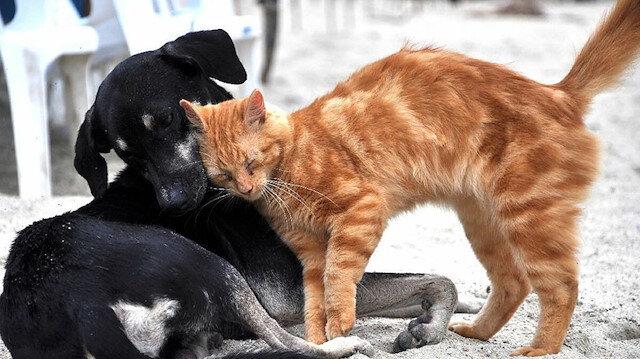 Hayvan Hakları Yasası'nda sona gelindi: MYK'da gündeme gelecek
