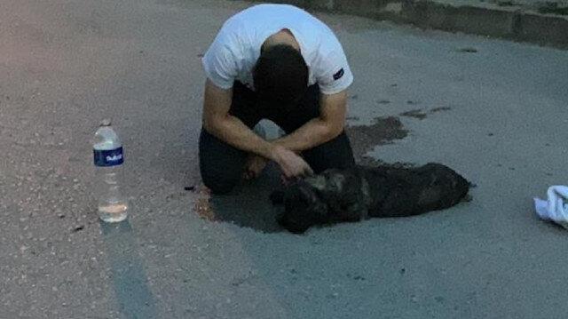 Araç çarpmasıyla yaralanan köpeğine sarılarak ağladı