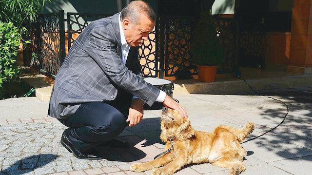 Cumhurbaşkanı Erdoğan'dan hayvan hakları talimatı:  Meclis kapanmadan yasayı çıkarın