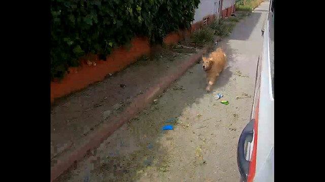 Vefalı köpek: Sahibinin içinde olduğu ambulansın peşinden koştu