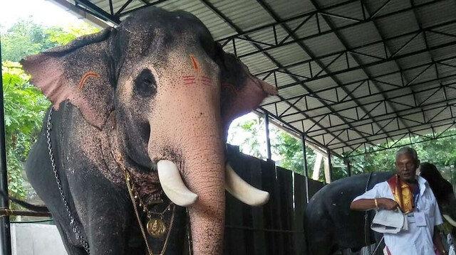 Hindistan'da ilginç olay: Bir fil ölen bakıcısını son kez görmek için kilometrelerce yol yürüdü