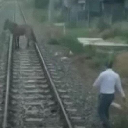 Bağlanarak tren rayında ölüme terk edilen atı makinistler kurtardı