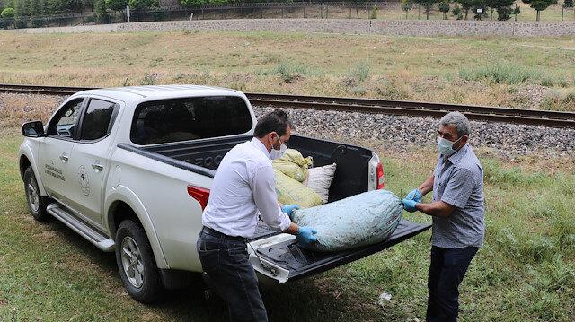 Baskın yapılan evde kaçak toplanan 5 çuval salyangoz ele geçirildi