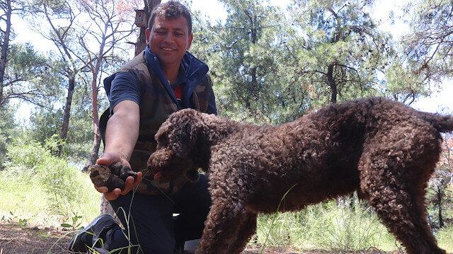 Eğitimli köpekle arazide arıyorlar: Kilosu 2 bin 500 TL