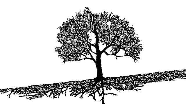 Meyvesiz ağaç