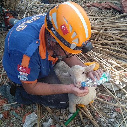 Ahır inşaatı çöktü 150 koyun ve kuzu göçük altında kaldı