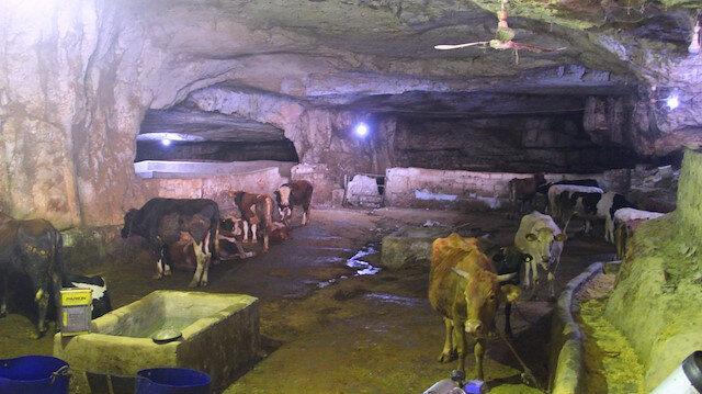 Şanlıurfa'da sıcak havalar dolayısıyla mağaralar ahıra döndü