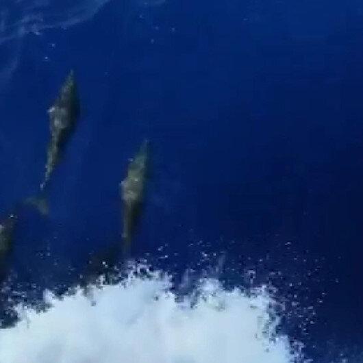 Akdeniz açıklarında balıkçı teknesine eşlik eden yunuslar renkli görüntü oluşturdu