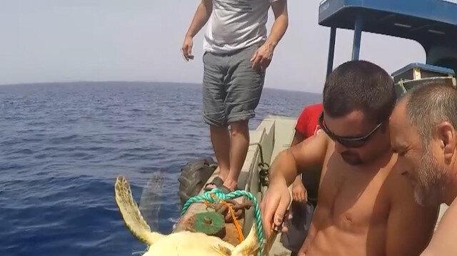 Denizlerdeki atıklar canlıların hayatını tehdit ediyor: İplere takılan deniz kaplumbağasını balıkçılar kurtardı