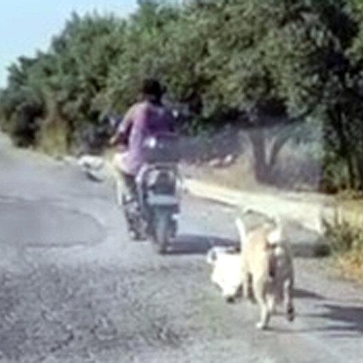 Mersinde hayvana şiddet kamerada: Köpeği elektrikli bisikletinin arkasına bağlayıp sürükledi