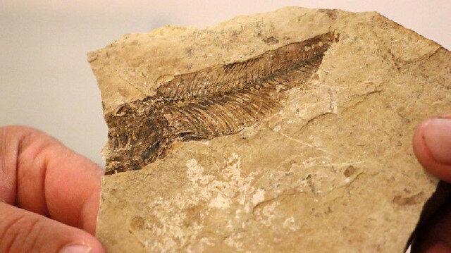 Dünya için yeni bir cins: Meksika'da 95 milyon yıllık balık fosili bulundu