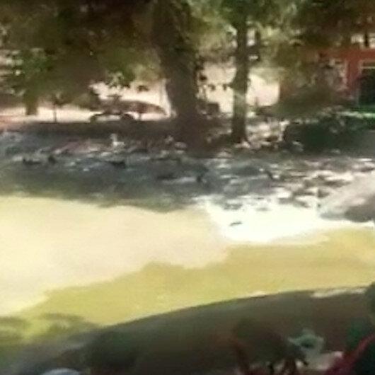 Gaziantepte hayvanat bahçesinde aslan kafesten kaçtı: Panik anları kamerada