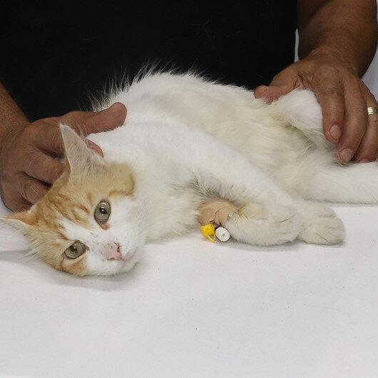 Civcivleri yediği iddia edilen kedi tüfekle vuruldu