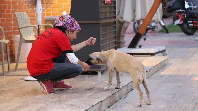 Manisa'da belediye çalışanı susuzluktan bitkin düşen köpeğe elleriyle su içirdi