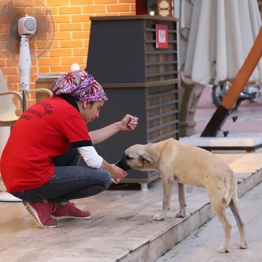 Manisada belediye çalışanı susuzluktan bitkin düşen köpeğe elleriyle su içirdi