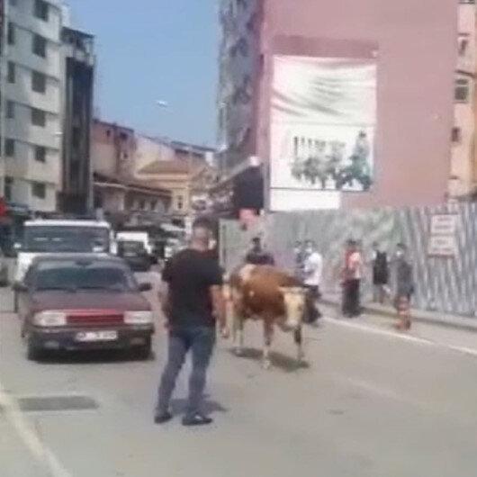 Zonguldakta kurban pazarından kaçan dana trafiği birbirine kattı
