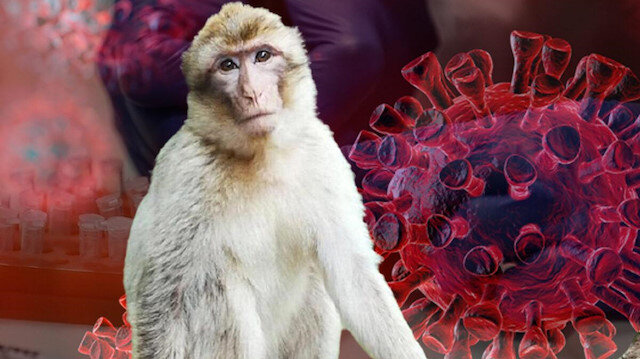Çin'de Monkey B virüsü nedeniyle ilk kez bir kişi hayatını kaybetti